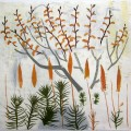 Bog Myrtle mire Spring    mixed media   67 x 66 cm